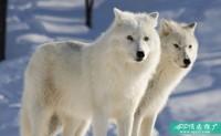 """25个""""空手套白狼""""的APP推广方法,你值得拥有!"""